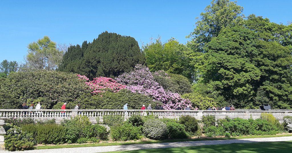 Le parc du Grand Daubeuf : promeneurs parmi les arbres et rhododendrons en fleurs