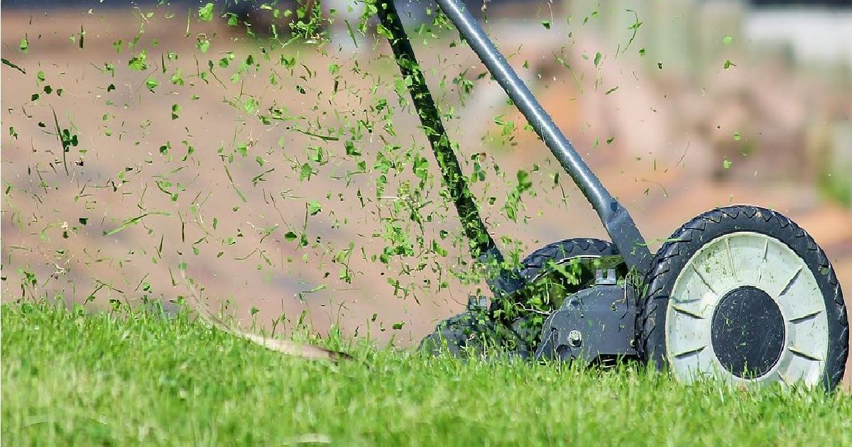 Tonte de pelouse