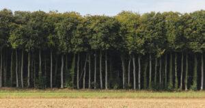 Haies d'arbres hauts